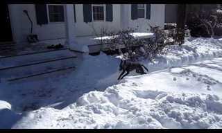 זו הסיבה שכלבים אוהבים את החורף - חמוד!