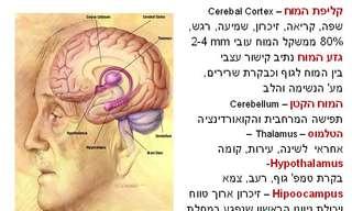 תחזוקת המוח - השפעה על איכות ואריכות החיים!