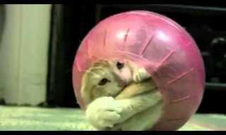 החתול הסקרן שחשב שהוא אוגר