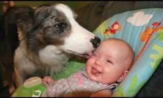 סרטון מקסים של כלבים וילדים קטנים שנפגשים לראשונה