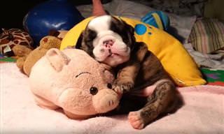 סרטון של חיות חמודות בזמן שהן ישנות