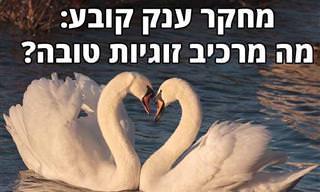 מחקר חדש מצא את אבני היסוד של מערכות יחסים מוצלחות