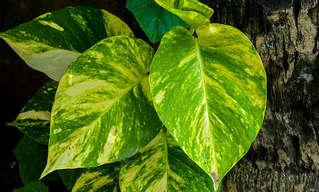 3 צמחים נפוצים שיקנו לכם 100% אוויר נקי