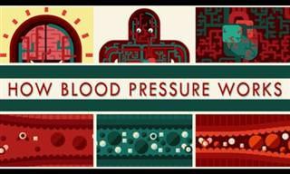 כל מה שרציתם לדעת על לחץ הדם