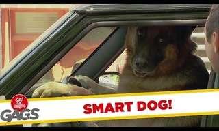 הנהג הזה סתם כלב! מתיחה מצחיקה