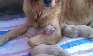 ככה זה נראה להיות אמא בממלכת החיות!
