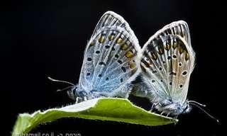 החיים הסודיים של החרקים - תמונות מהממות!