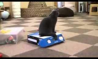 לצאת מהקופסא - הסקרנות כלאה את החתול!