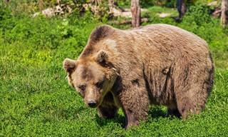 איך מחזירים דוב בתשובה? בדיחה קורעת