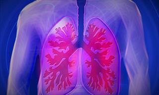 10 המאכלים האלו יעזרו לכם לשמור על בריאות הריאות שלכם