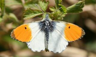 14 פרפרים צבעוניים ומרהיבים שאפשר למצוא בישראל