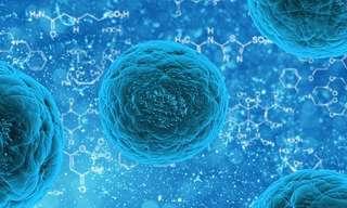 תאי הגזע - עתיד הרפואה כבר כאן