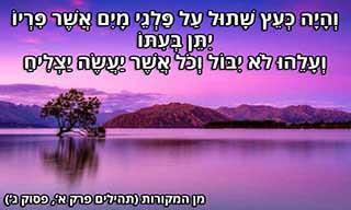 14 ציטוטים יפהפיים בעברית שנבחרו על ידי גולשי האקדמיה ללשון עברית