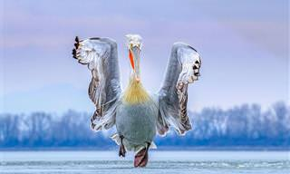 17 תצלומים זוכי פרסים מתחרות צילום הציפורים של שנת 2019
