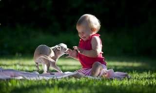 15 עובדות מדהימות על כלבים