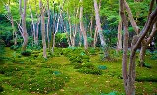 20 גנים יפניים נסתרים