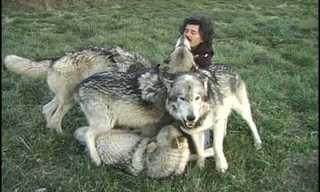 זאב לאדם אדם - לא להאמין!