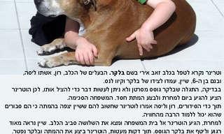 סיפור מרגש ומעורר מחשבה על ילד וכלב