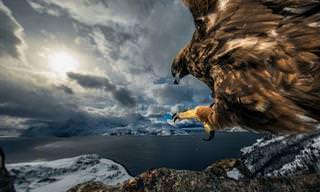 12 התמונות המנצחות מתחרות צילום חיות הבר לשנת 2019