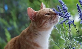 הרעלת שושנים - סכנה קטלנית שמגדלי חתולים חייבים להכיר