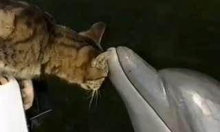 חתול ודולפין - החברות הכי חמודה בטבע!