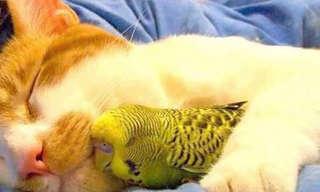 צמדי חיות בלתי צפויים מכורבלים יחדיו