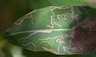 5 דרכים טבעיות פשוטות לטיפול בחרקי מנהרות