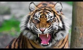 תיעוד מדהים של חיות תוקפות!