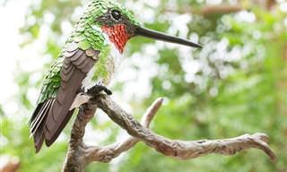 סדרת תמונות נפלאה של ציפורים צבעוניות עם מכנה משותף מפתיע