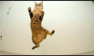 חתולים שלא הבינו איך עובד כוח הכבידה