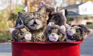 20 חיות חמודות שיגרמו לכם לחייך מאוזן לאוזן