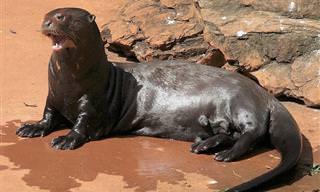 12 בעלי חיים נדירים וייחודיים שאולי לא ידעתם על קיומם