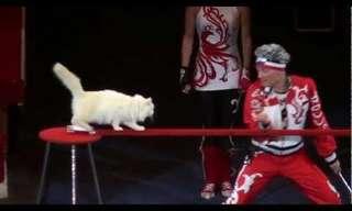מופע אקרובטיקה חתולי מדהים!