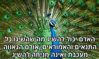 """14 ציטוטי חז""""ל שיכניסו את חכמת היהדות לחייכם"""