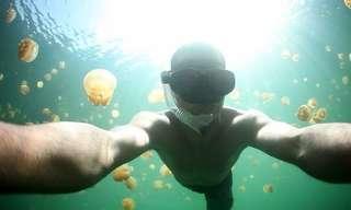 לשחות עם 13 מיליון מדוזות בפלאו!