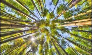 יערות במבוקים מדהימים מרחבי אסיה