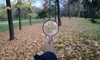 בחן את עצמך: האם תצליח לזהות את החפצים בצילומי התקריב?