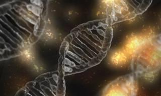 מחקר חדש חשף אנזים בגופנו שיכול למנוע הזדקנות וסרטן