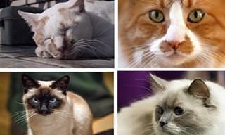 מבחן החתולים: בחרו בחתול האהוב עליכם וגלו פרטים מרתקים על אישיותכם