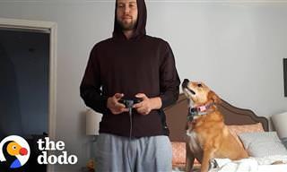 כלבה מקסימה שלא נותנת לבעלים שלה לשקוע במשחק