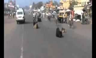 נותנים כבוד: תרבות הכבישים בהודו!