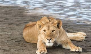 צאו למסע בממלכת החיות של אפריקה עם צילומיה הנהדרים של מטיילת ישראלית