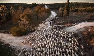 14 תמונות מדהימות מתחרות הצילום השנתית של סיינה לשנת 2019