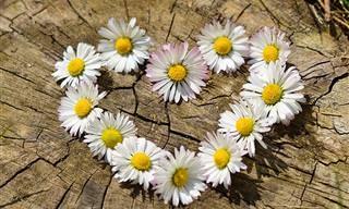 הלב הוא כמו פרח - ברכה מרגשת לאנשים שאנחנו אוהבים