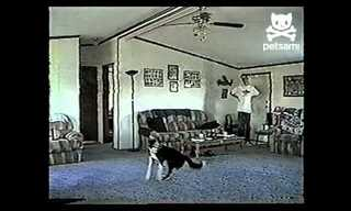איך כלב עושה חיקוי של מאוורר? ענק!