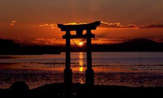 הכירו את עקרונות האיקיגאי - הנוסחה היפנית לחיים מאושרים