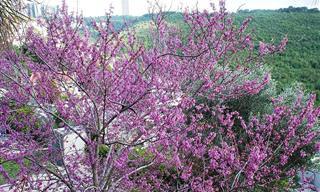 12 עצים מופלאים שניתן למצוא בארץ ישראל