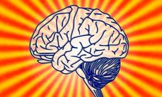 גלו את גיל המוח שלכם