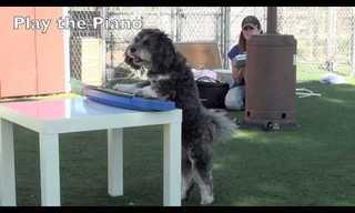 כלבת הפלא שיודעת מעל ל-40 תרגילים