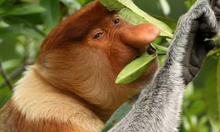 14 בעלי חיים מוזרים ומפתיעים שכנראה לא הכרתם עד היום!